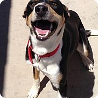 Adopt A Pet :: Della - Cedar City, UT