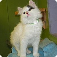 Adopt A Pet :: Lemonte' - Dover, OH