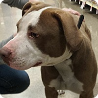 Adopt A Pet :: Roxanne - Westley, CA