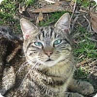 Adopt A Pet :: Buster - Mobile, AL