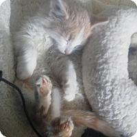 Adopt A Pet :: Baden - Fairborn, OH