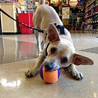 Adopt A Pet :: Orson - Lafayette, CA