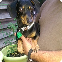Adopt A Pet :: George - Charlestown, RI
