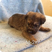 Adopt A Pet :: Sam - Buffalo, NY