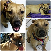 Adopt A Pet :: Farrah - Forked River, NJ