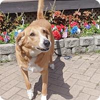 Adopt A Pet :: Twick - West Chicago, IL