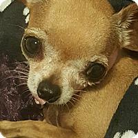 Adopt A Pet :: Kiwi - San Marcos, CA