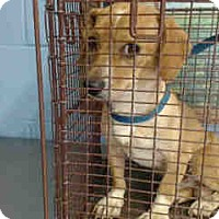 Beagle Mix Dog for adoption in San Bernardino, California - URGENT on 10/5 SAN BERNARDINO