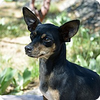 Adopt A Pet :: Trudy - Mountain Center, CA