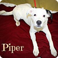 Australian Shepherd/Collie Mix Dog for adoption in Melbourne, Kentucky - Piper