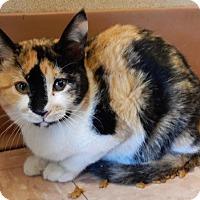 Adopt A Pet :: Sadie - Batavia, NY