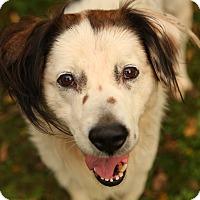 Adopt A Pet :: Ripley - Lafayette, IN