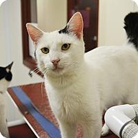 Adopt A Pet :: Bobbie - Springfield, IL