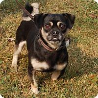 Adopt A Pet :: Fiddler - Winder, GA