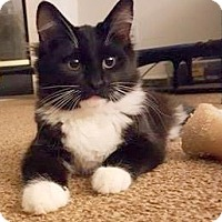 Adopt A Pet :: Bell - Concord, NC