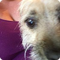 Adopt A Pet :: Mert - Palm Bay, FL