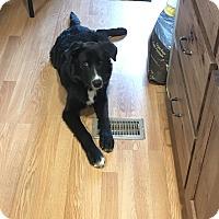 Adopt A Pet :: Jack - Manhattan, KS