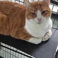 Adopt A Pet :: Bert - Westminster, CA