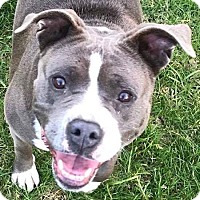 Adopt A Pet :: Mabel - Lompoc, CA