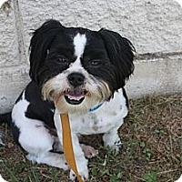 Adopt A Pet :: Jasper - Stilwell, OK