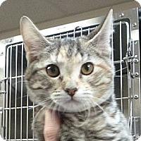 Adopt A Pet :: Beans - St. Petersburg, FL