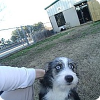 Adopt A Pet :: adler - Gadsden, AL