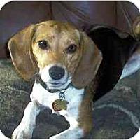 Adopt A Pet :: Libby - Novi, MI