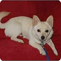 Adopt A Pet :: Spirit - San Francisco, CA
