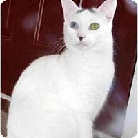 Adopt A Pet :: Lakota - Xenia, OH