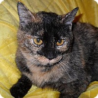 Adopt A Pet :: Amber Marie - Hampshire, IL