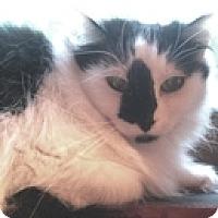 Adopt A Pet :: Calista - Vancouver, BC