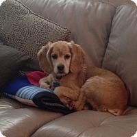 Adopt A Pet :: Wilson -Adopted! - Kannapolis, NC