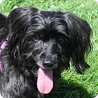 Adopt A Pet :: Francesca - North Olmsted, OH