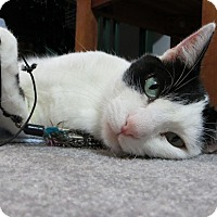 Adopt A Pet :: Corwin - Xenia, OH