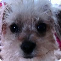 Adopt A Pet :: Otis - San Diego, CA