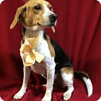 Adopt A Pet :: Mindy - Thomspn, CT