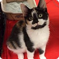 Adopt A Pet :: Presley - Caistor Centre, ON