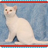 Adopt A Pet :: Arwen - Mt. Prospect, IL