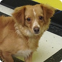 Adopt A Pet :: Phil - PHOENIX, AZ