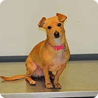 Adopt A Pet :: Bailey - Suwanee, GA
