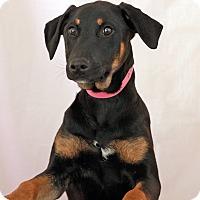 Adopt A Pet :: Jane - Waldorf, MD