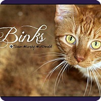Adopt A Pet :: Binks - Cumbeland, MD