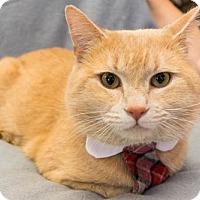 Adopt A Pet :: Cramer - Alpharetta, GA