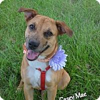 Adopt A Pet :: Casey Mae - Independence, MO