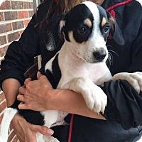 Adopt A Pet :: Maverick (11 lb) Video! - SUSSEX, NJ