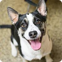 Adopt A Pet :: Zoe - Cranston, RI