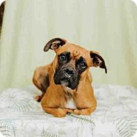 Adopt A Pet :: *PEGGY - Sugar Land, TX