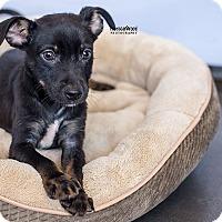 Adopt A Pet :: Burton - Atlanta, GA