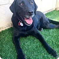 Adopt A Pet :: Lulu - Litchfield Park, AZ