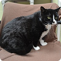 Adopt A Pet :: Freckles - Wheaton, IL